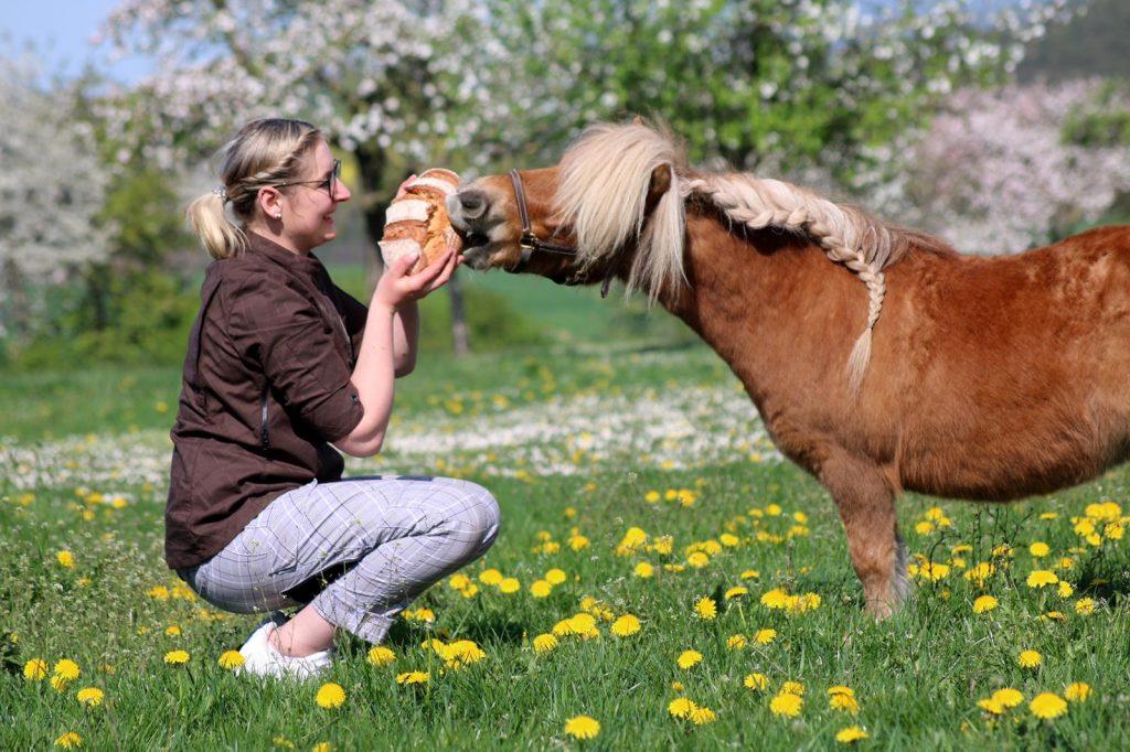 Gutboeckeluehr Pony1